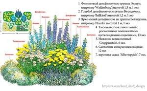 Расположение цветов на клумбе