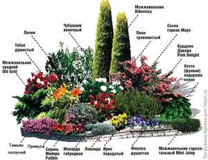 Создание цветника из многолетников
