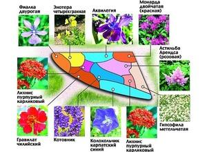Тонкости создания цветников