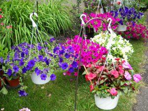 Как правильно оформить цветник