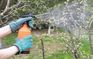 Опрыскивание медным купоросом плодовых деревьев