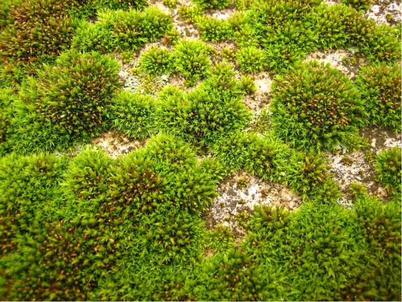 Как используется мох