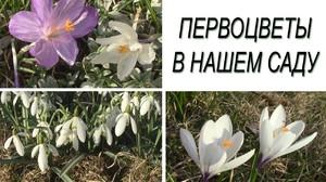 Мартовские растения