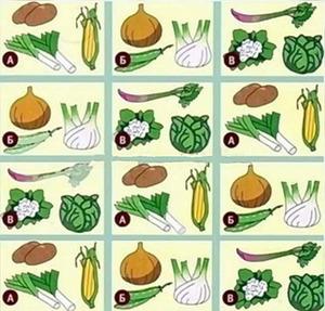 Соседство овощей на грядках
