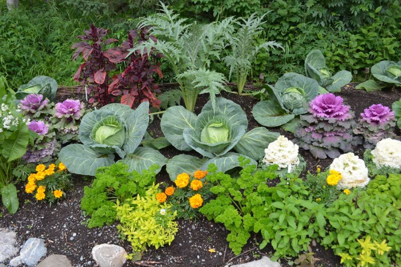 Совместимость овощей