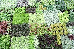 Правила удачного совмещения растений