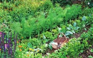 Совместимость на грядке овощных культур