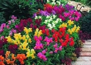 Клумба с многолетними растениями
