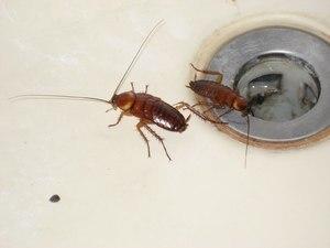 Домашние насекомые в квартире