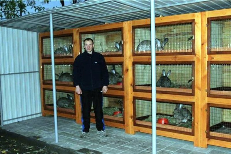 Содержание кроликов в самодельных клетках