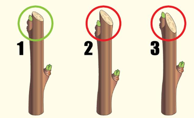 А вы знаете, как обрезать яблоню правильно? Если есть сомнения их можно развеять здесь
