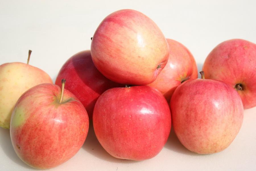 Сорта яблок