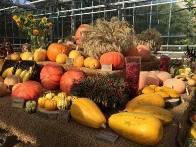 Как отмечают праздник урожая в Англии?