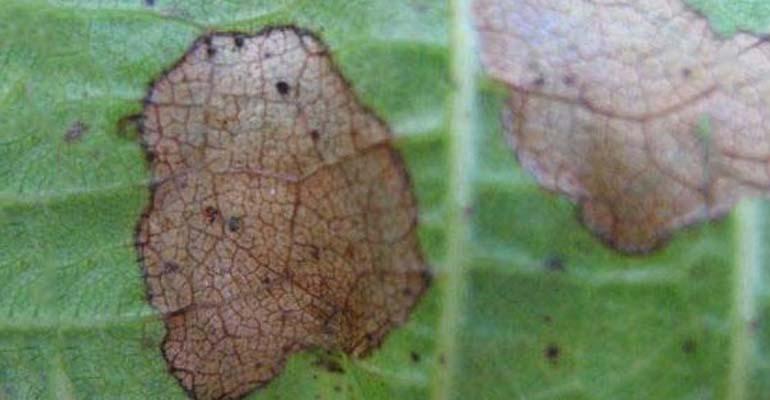 глоксиния уход в домашних посадка