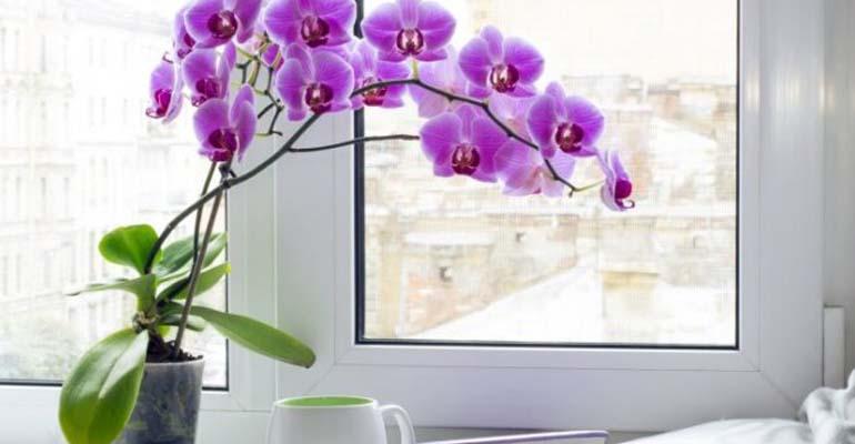 видео пересадки орхидей в домашних