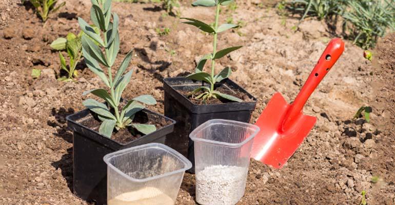 эустома выращивание из семян когда сеять