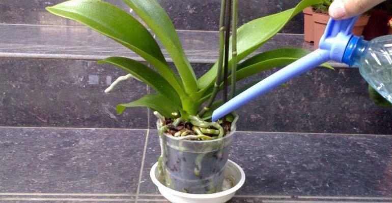 пересадка орхидеи в другой горшок