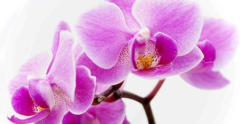 пересадка орхидеи в домашних условиях видео