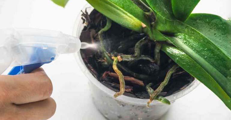 пересадка орхидеи в другой